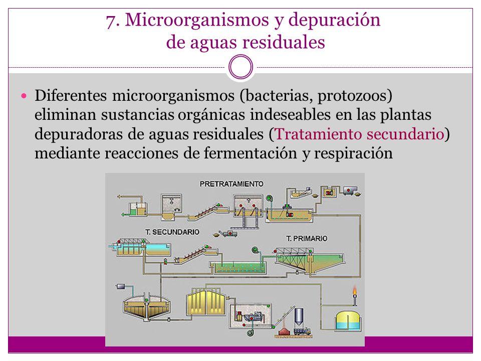 7. Microorganismos y depuración de aguas residuales