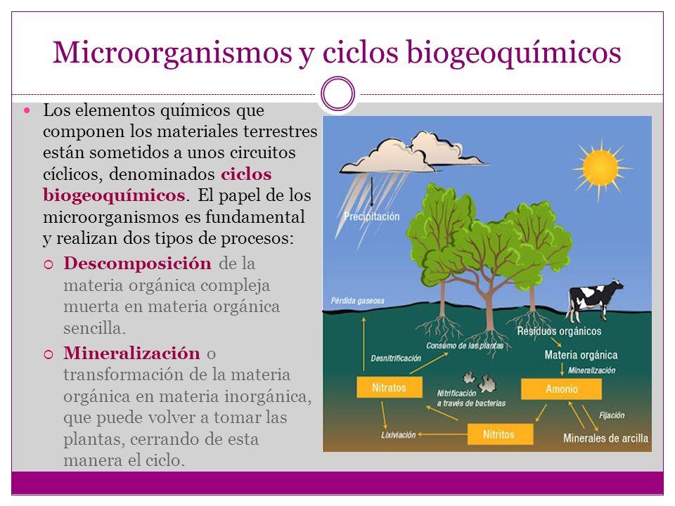 Microorganismos y ciclos biogeoquímicos