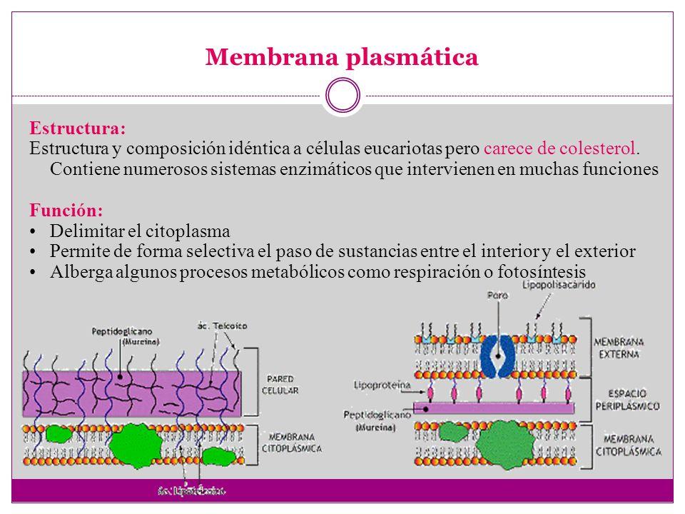 Membrana plasmática Estructura: