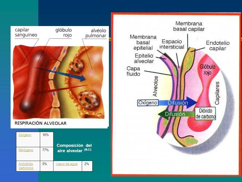 Composición del aire alveolar (N.E)