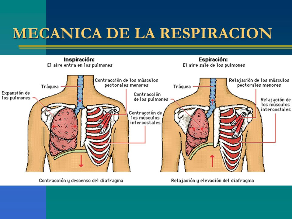 MECANICA DE LA RESPIRACION