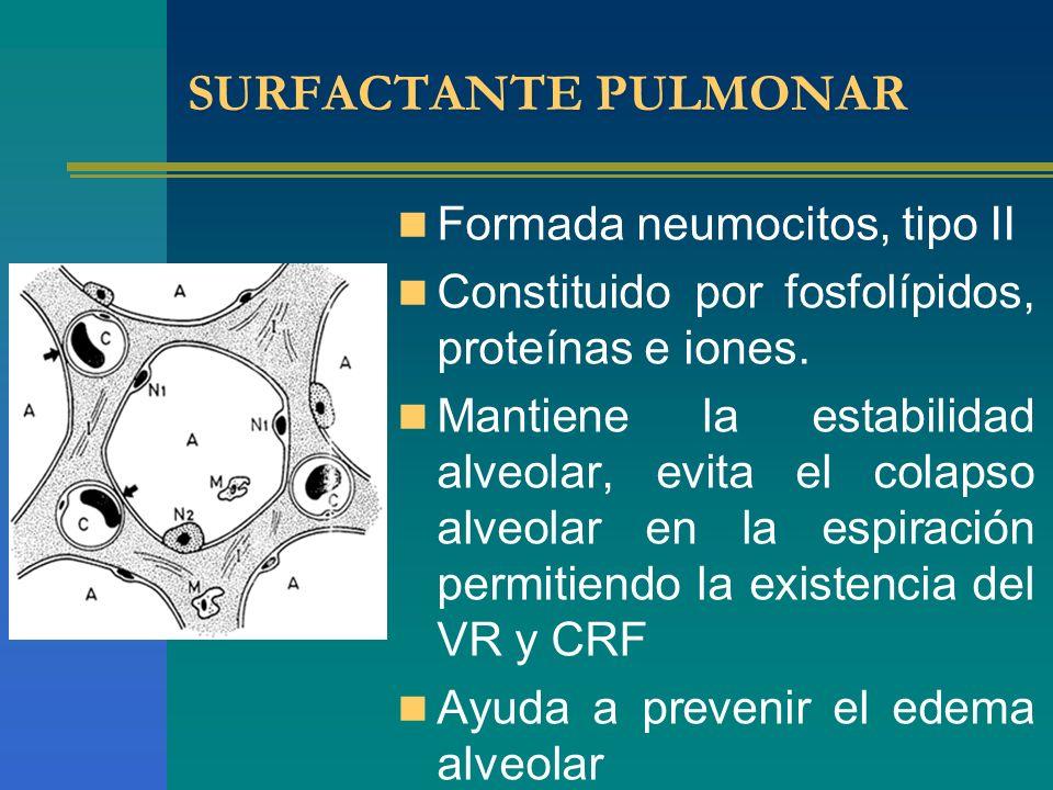 SURFACTANTE PULMONAR Formada neumocitos, tipo II