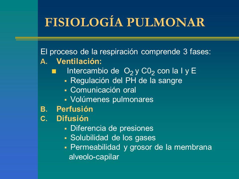 FISIOLOGÍA PULMONAR El proceso de la respiración comprende 3 fases: