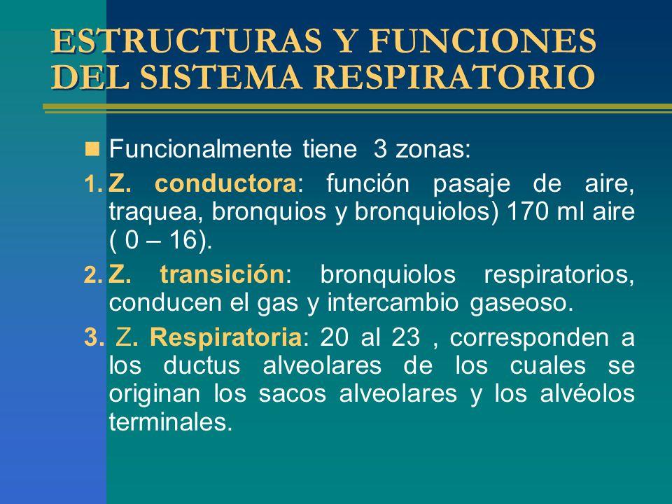 ESTRUCTURAS Y FUNCIONES DEL SISTEMA RESPIRATORIO