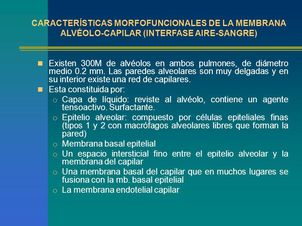 CARACTERÍSTICAS MORFOFUNCIONALES DE LA MEMBRANA ALVÉOLO-CAPILAR (INTERFASE AIRE-SANGRE)