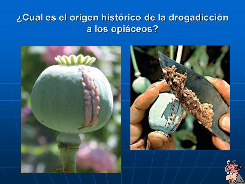 ¿Cual es el origen histórico de la drogadicción a los opiáceos