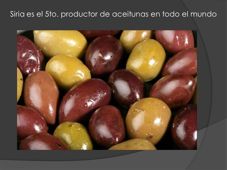 Siria es el 5to. productor de aceitunas en todo el mundo