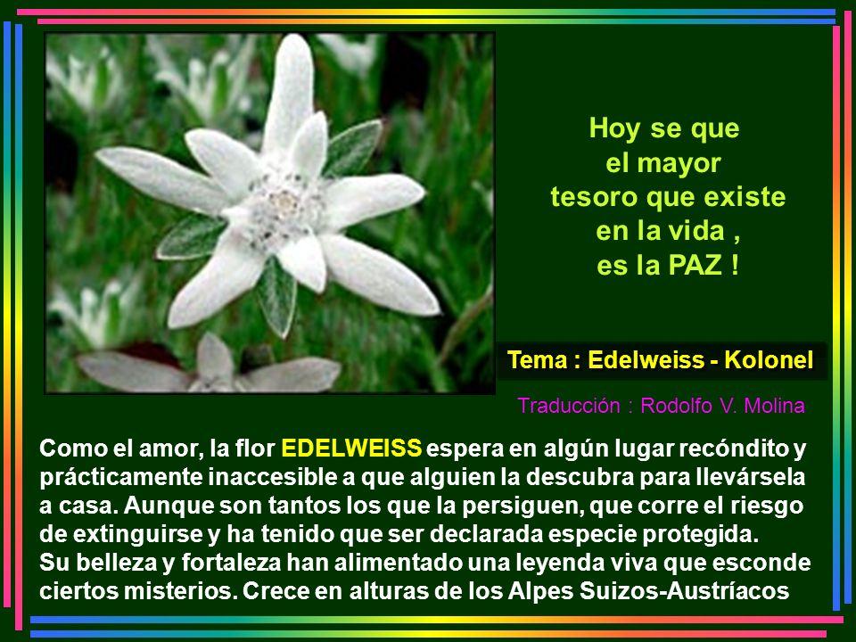 Tema : Edelweiss - Kolonel