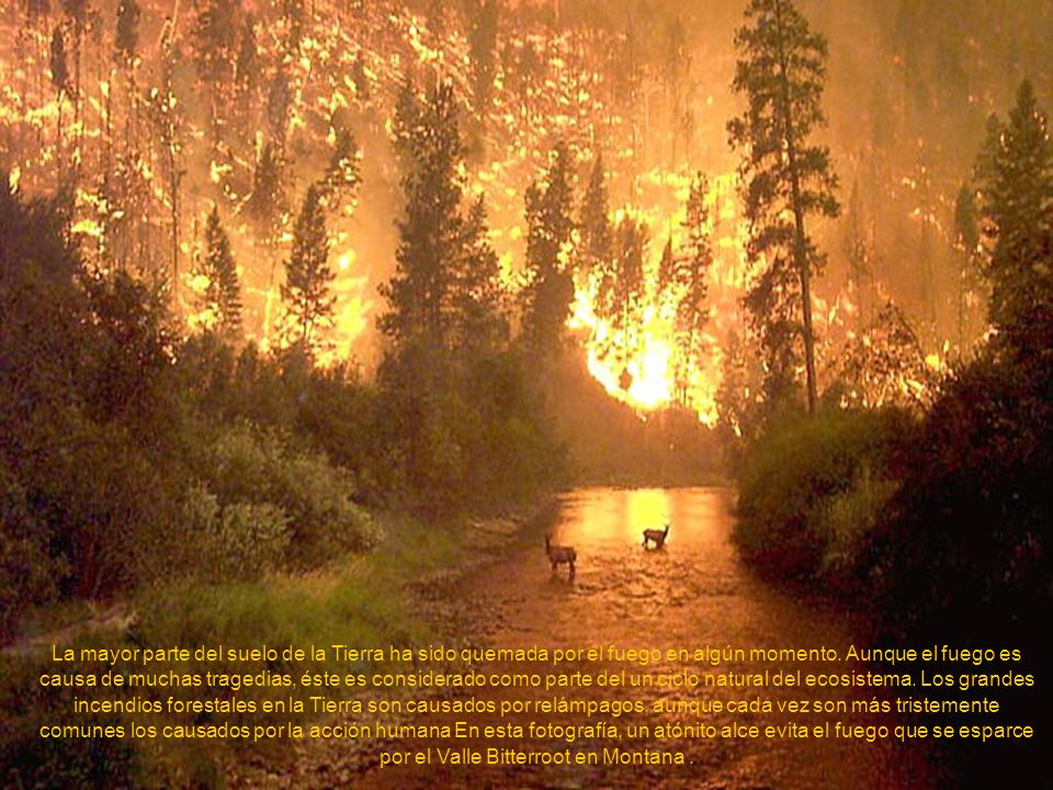 La mayor parte del suelo de la Tierra ha sido quemada por el fuego en algún momento.