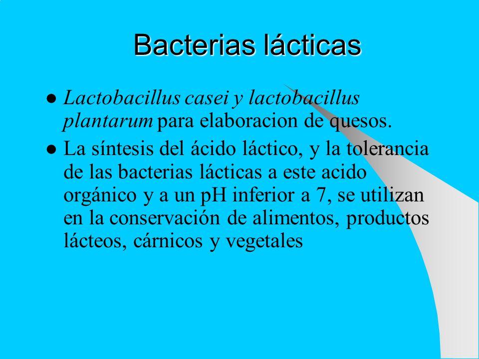 Bacterias lácticas Lactobacillus casei y lactobacillus plantarum para elaboracion de quesos.