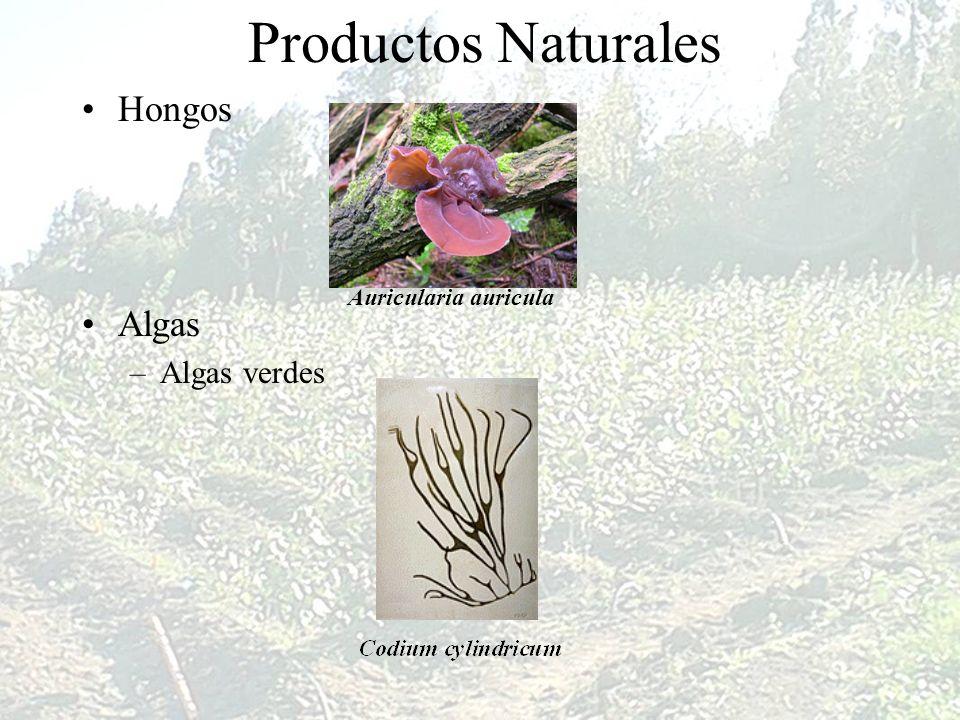 Productos Naturales Hongos Algas Algas verdes Auricularia auricula