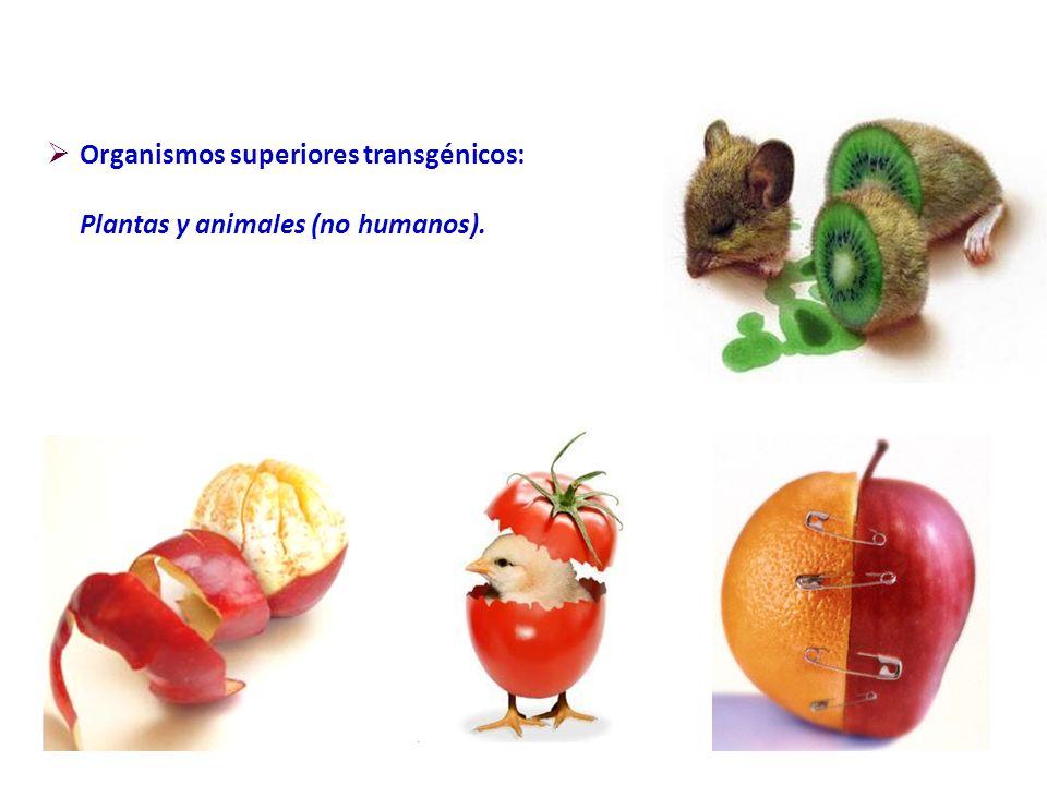 Organismos superiores transgénicos: