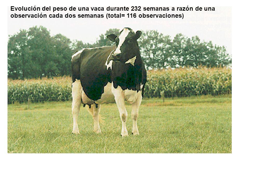 Evolución del peso de una vaca durante 232 semanas a razón de una observación cada dos semanas (total= 116 observaciones)