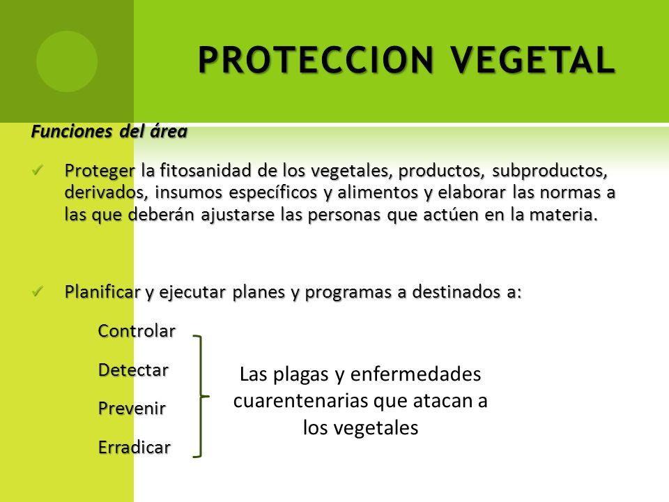 Las plagas y enfermedades cuarentenarias que atacan a los vegetales