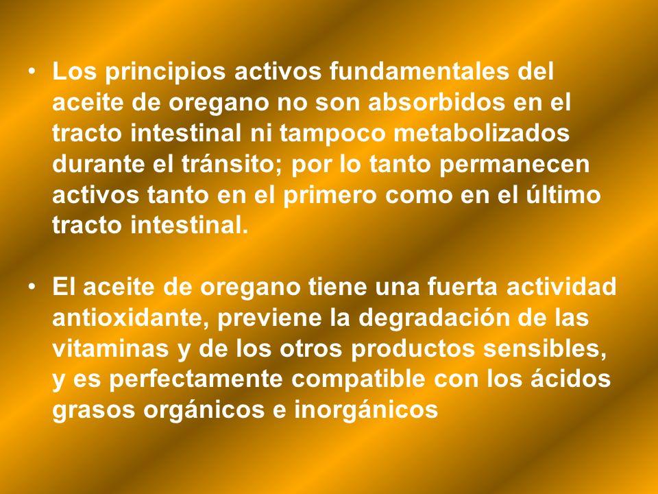 Los principios activos fundamentales del aceite de oregano no son absorbidos en el tracto intestinal ni tampoco metabolizados durante el tránsito; por lo tanto permanecen activos tanto en el primero como en el último tracto intestinal.