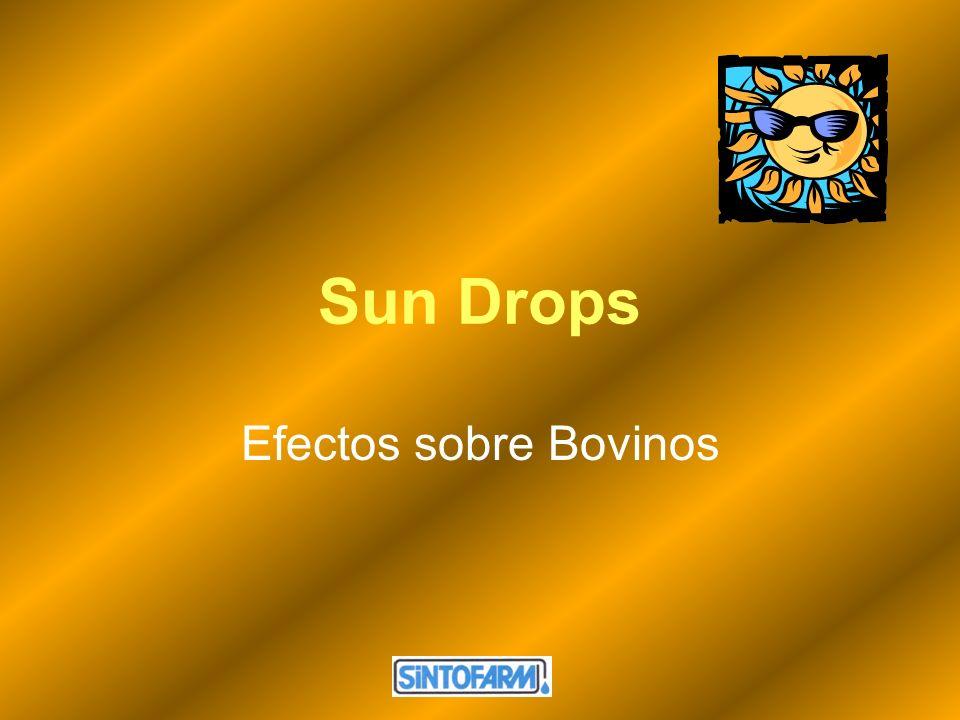 Sun Drops Efectos sobre Bovinos