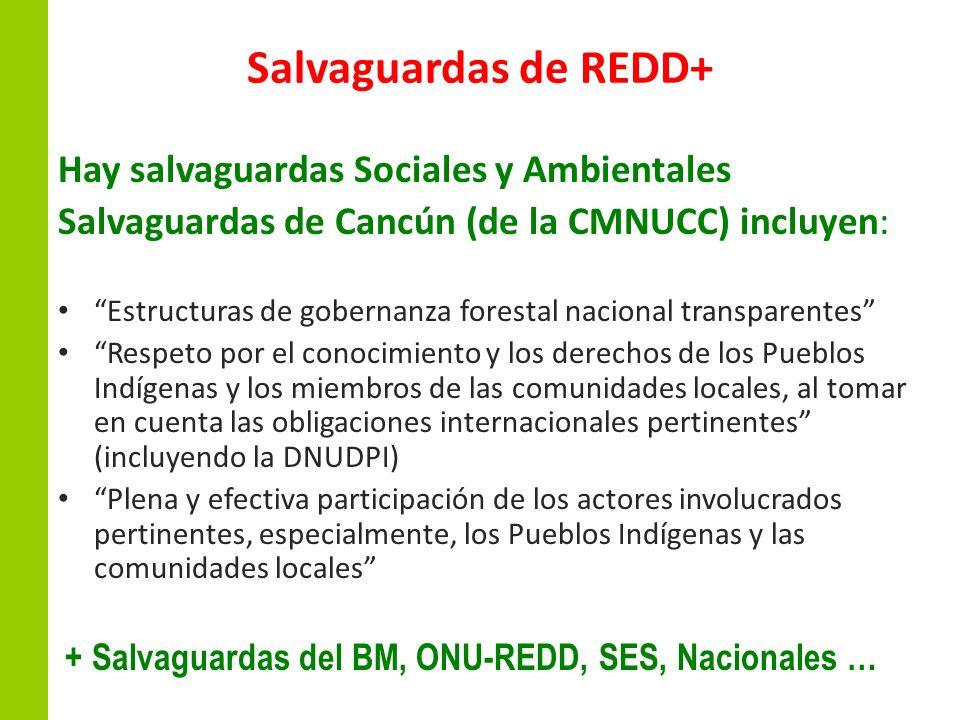 Salvaguardas de REDD+ Hay salvaguardas Sociales y Ambientales