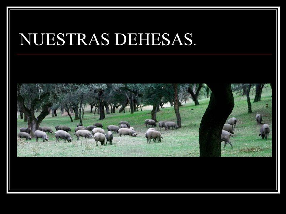 NUESTRAS DEHESAS.