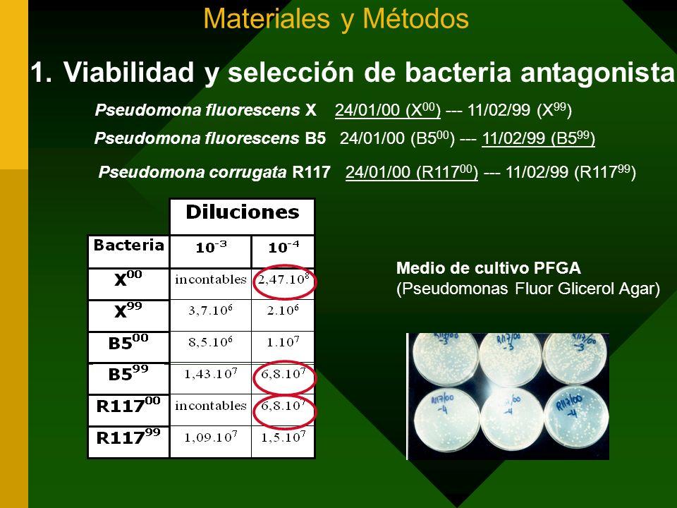 Viabilidad y selección de bacteria antagonista