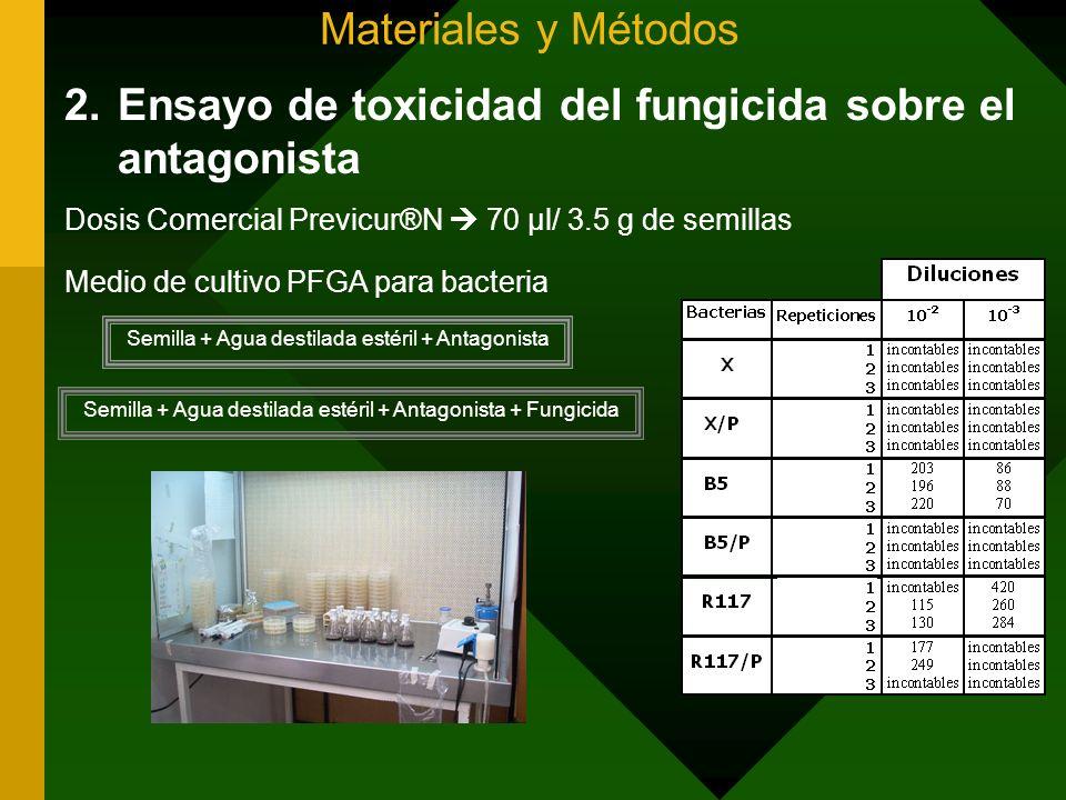 Ensayo de toxicidad del fungicida sobre el antagonista
