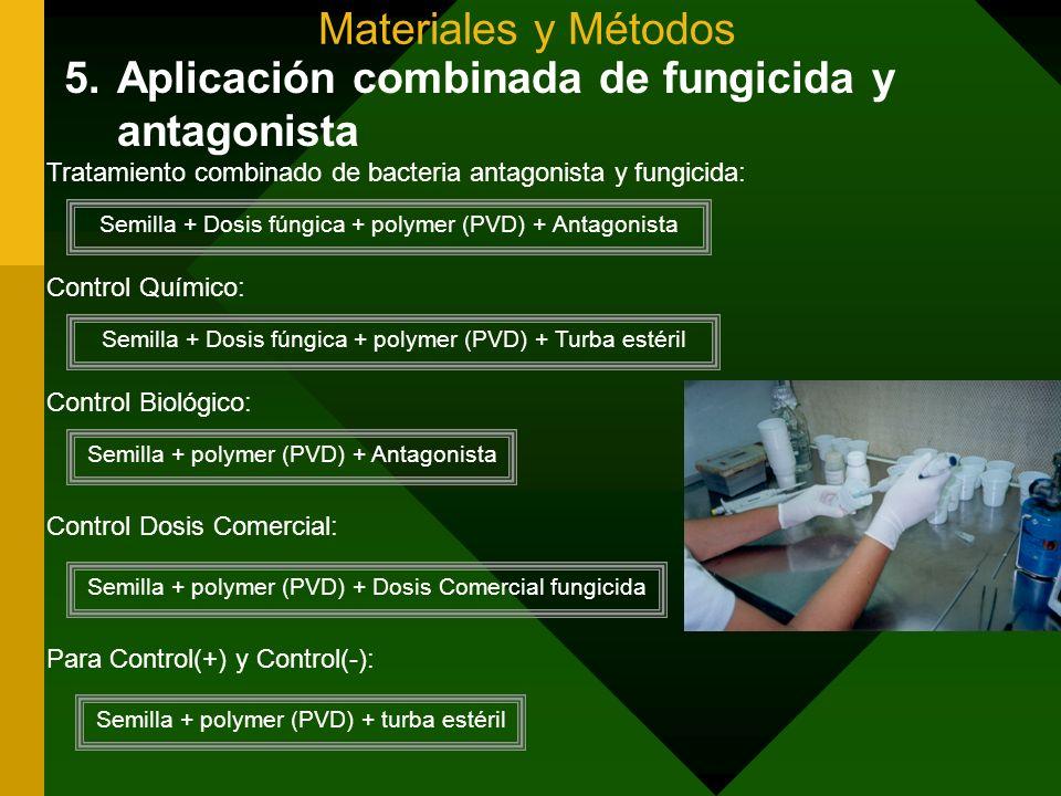 Aplicación combinada de fungicida y antagonista
