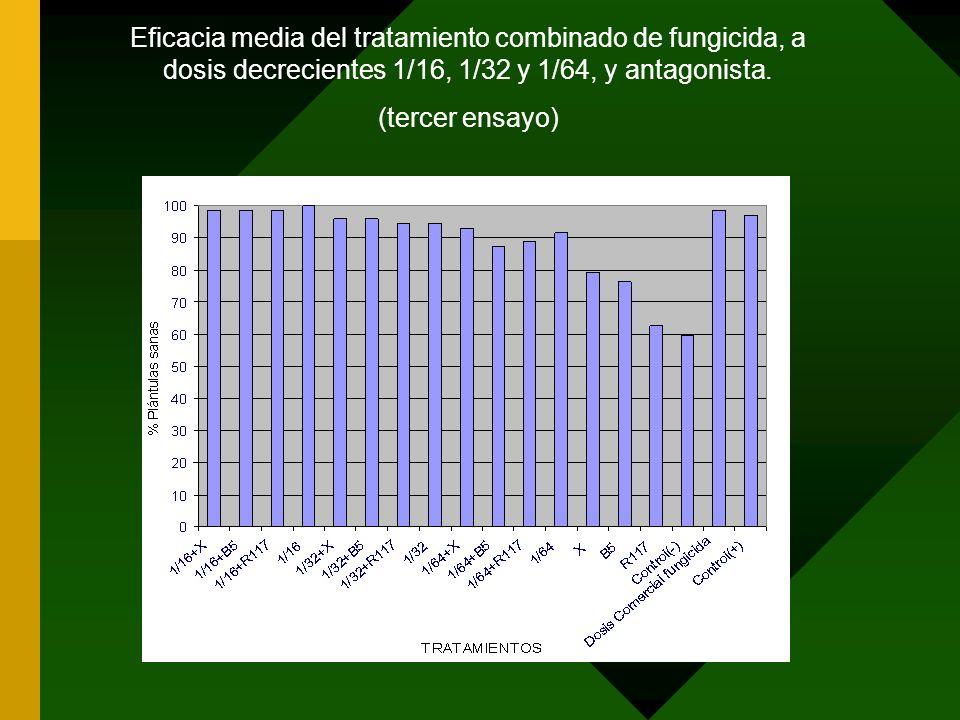 Eficacia media del tratamiento combinado de fungicida, a dosis decrecientes 1/16, 1/32 y 1/64, y antagonista.