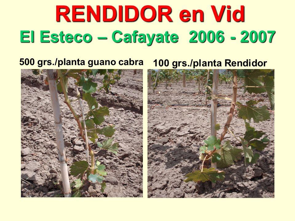RENDIDOR en Vid El Esteco – Cafayate 2006 - 2007