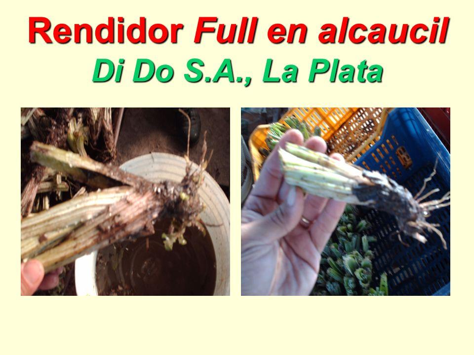 Rendidor Full en alcaucil Di Do S.A., La Plata