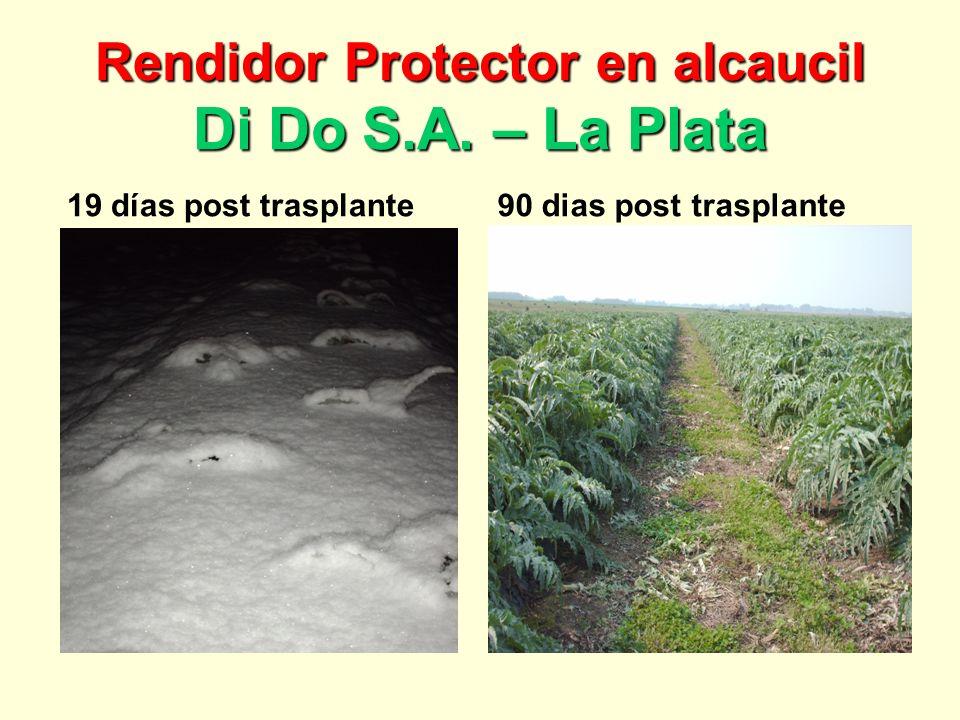 Rendidor Protector en alcaucil Di Do S.A. – La Plata