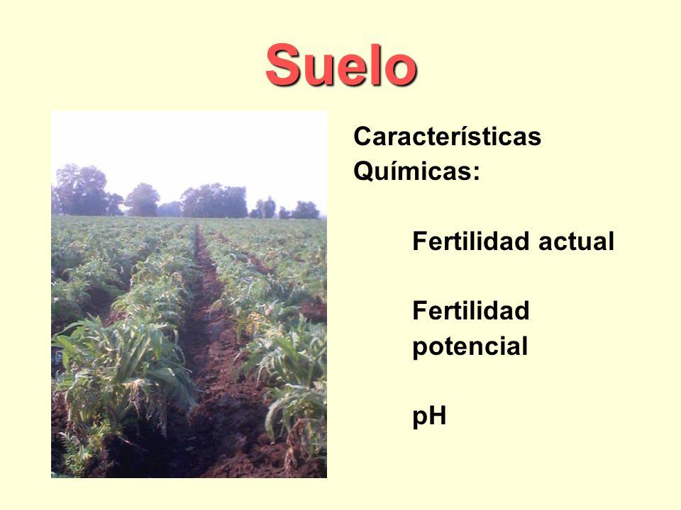 Suelo Características Químicas: Fertilidad actual Fertilidad potencial
