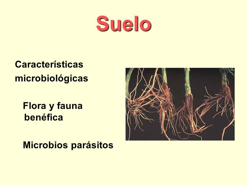 Suelo Características microbiológicas Flora y fauna benéfica