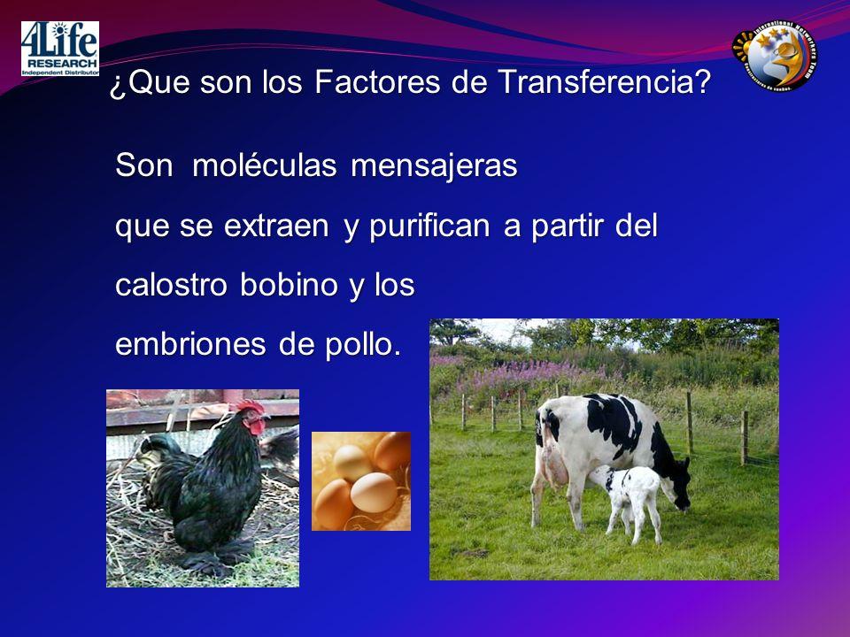 ¿Que son los Factores de Transferencia