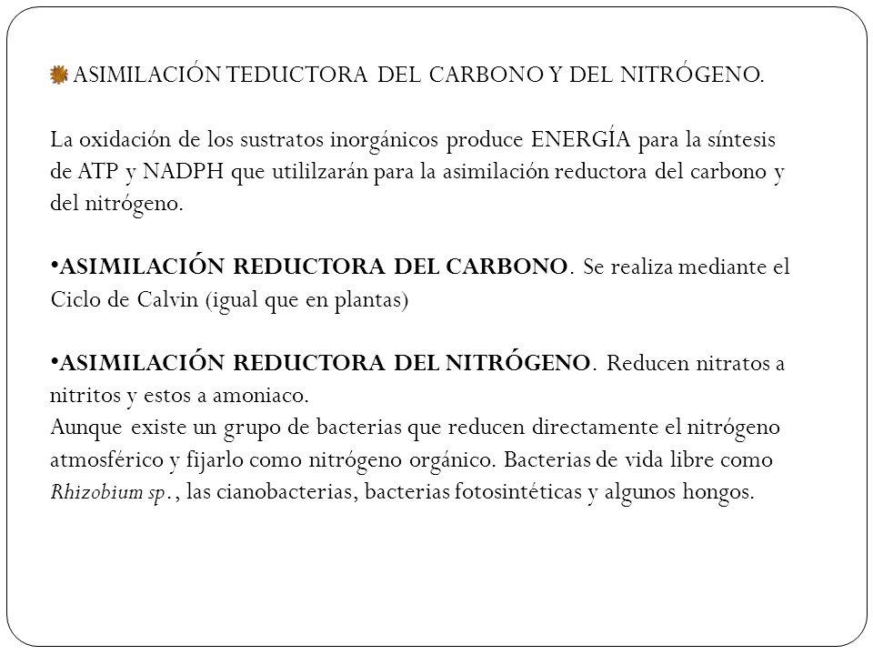 ASIMILACIÓN TEDUCTORA DEL CARBONO Y DEL NITRÓGENO.