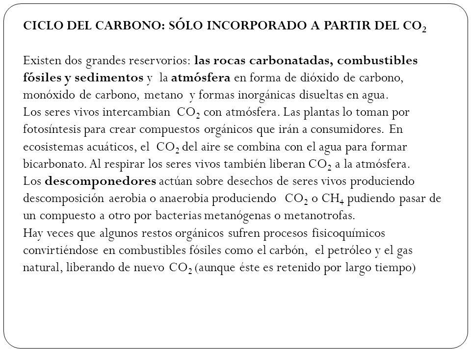 CICLO DEL CARBONO: SÓLO INCORPORADO A PARTIR DEL CO2
