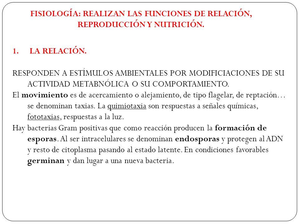 FISIOLOGÍA: REALIZAN LAS FUNCIONES DE RELACIÓN, REPRODUCCIÓN Y NUTRICIÓN.