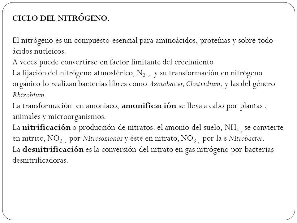CICLO DEL NITRÓGENO. El nitrógeno es un compuesto esencial para aminoácidos, proteínas y sobre todo ácidos nucleicos.
