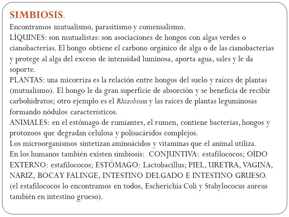 SIMBIOSIS. Encontramos mutualismo, parasitismo y comensalismo.