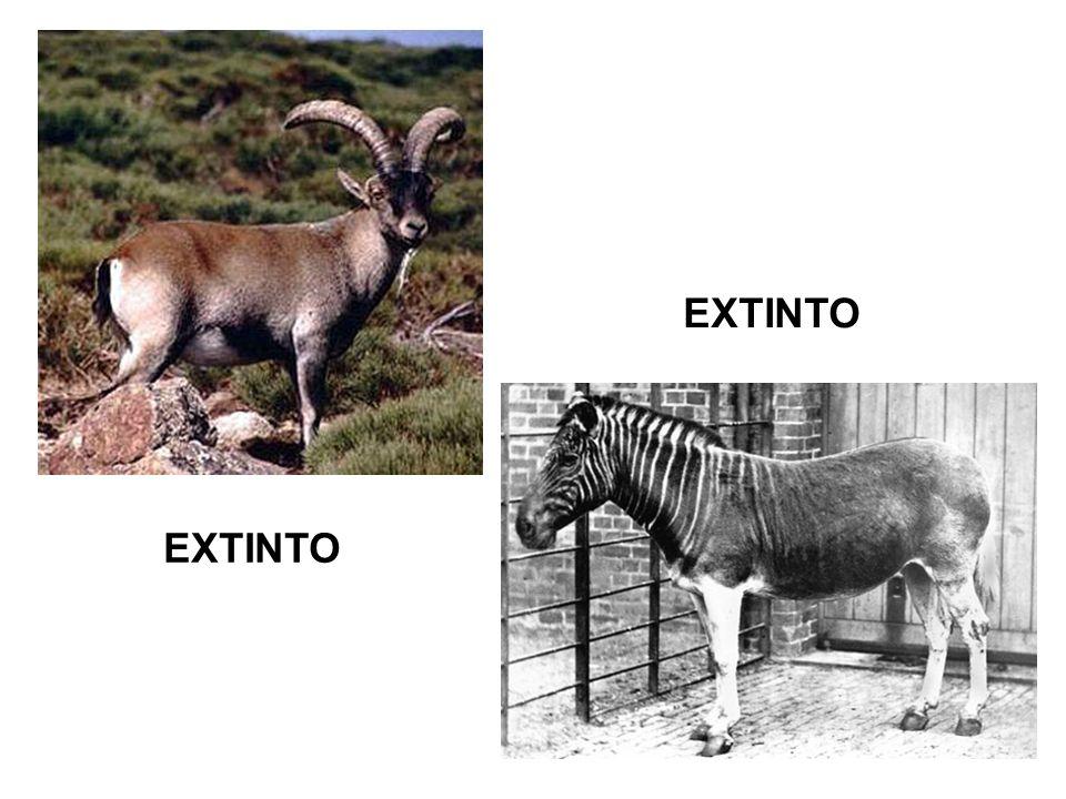 EXTINTO EXTINTO