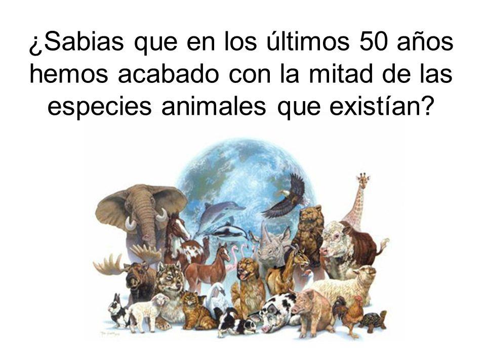 ¿Sabias que en los últimos 50 años hemos acabado con la mitad de las especies animales que existían