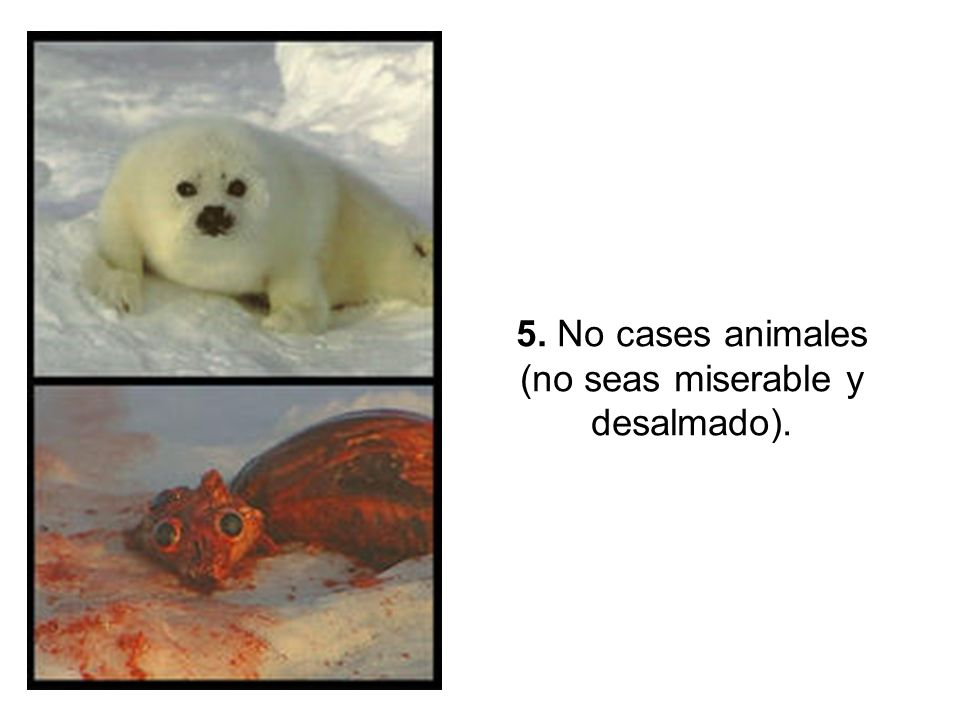 5. No cases animales (no seas miserable y desalmado).