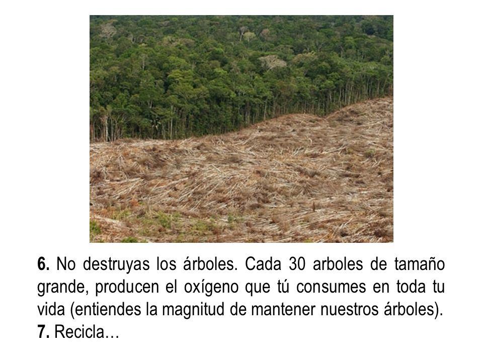 6. No destruyas los árboles