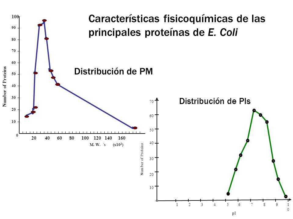 Características fisicoquímicas de las principales proteínas de E. Coli