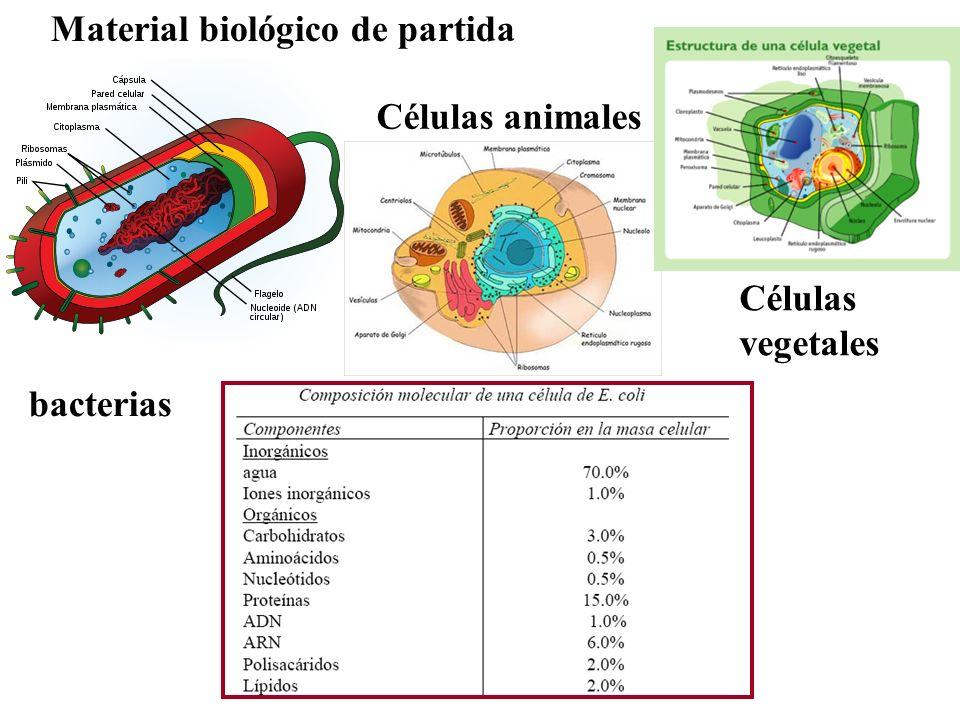 Material biológico de partida