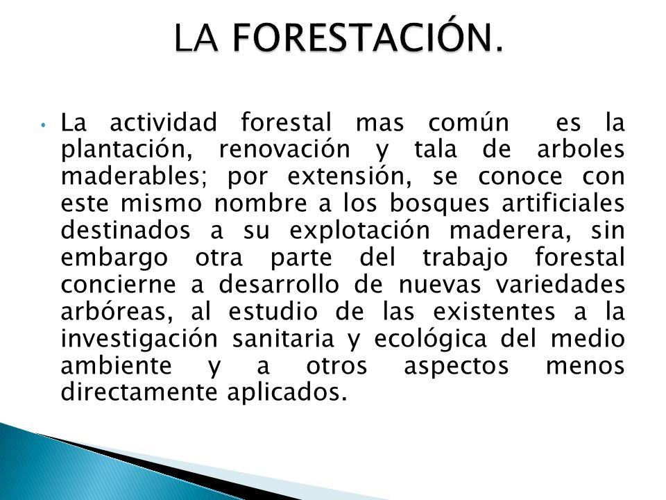 LA FORESTACIÓN.