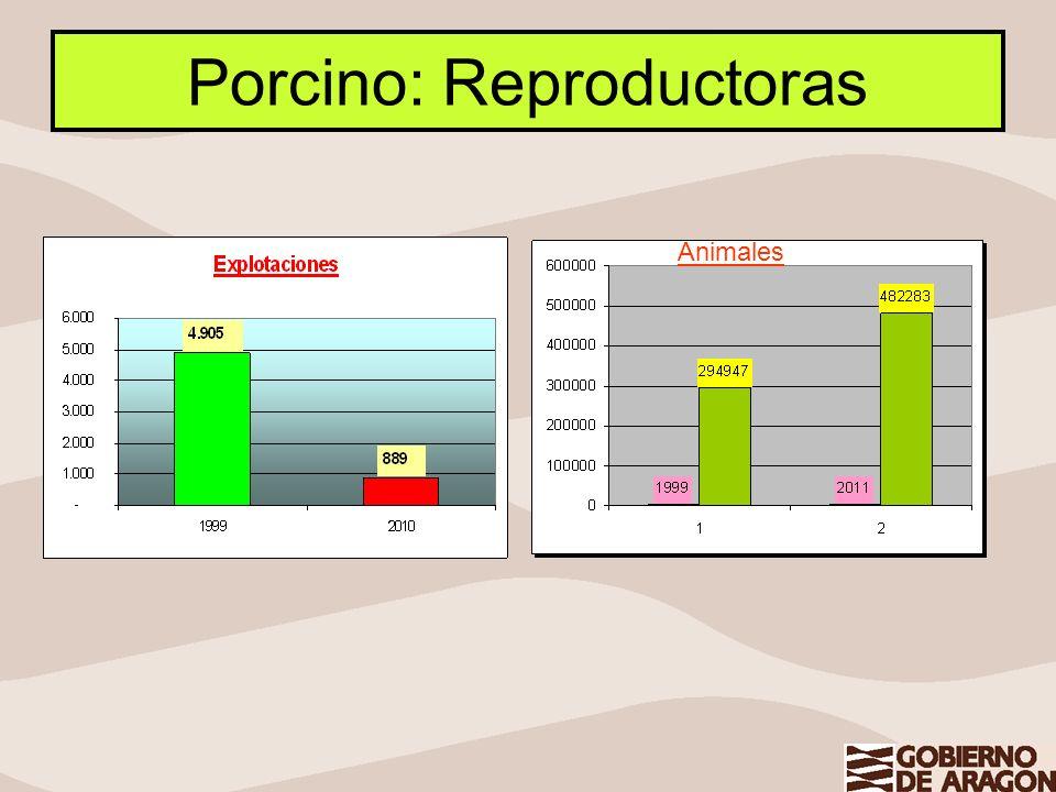Porcino: Reproductoras