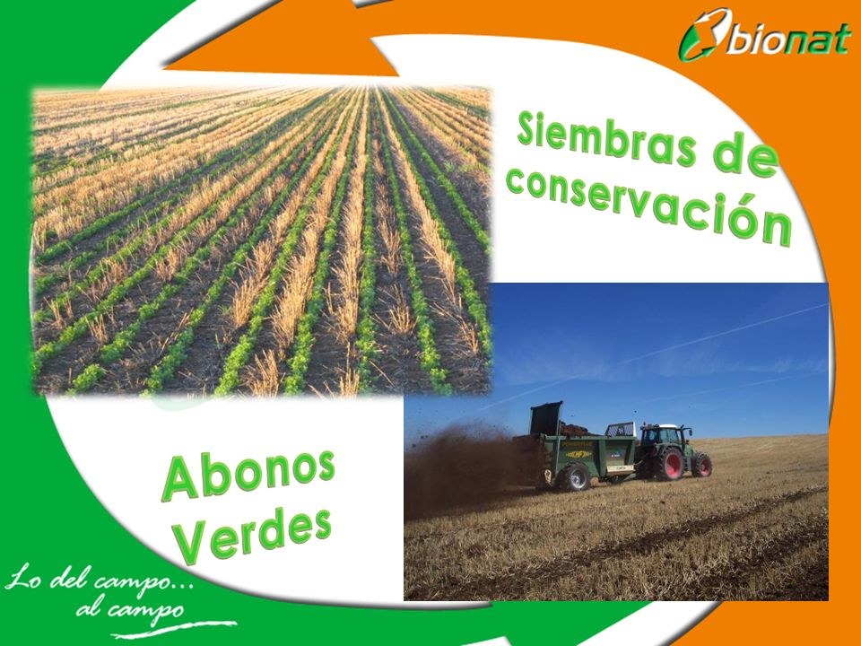Siembras de conservación Abonos Verdes