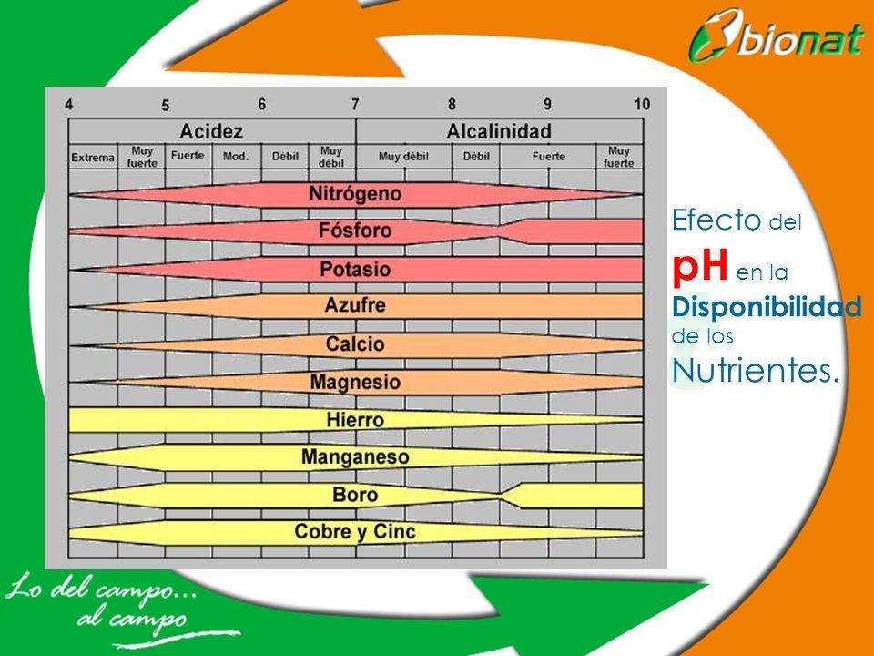 Efecto del pH en la Disponibilidad de los Nutrientes.