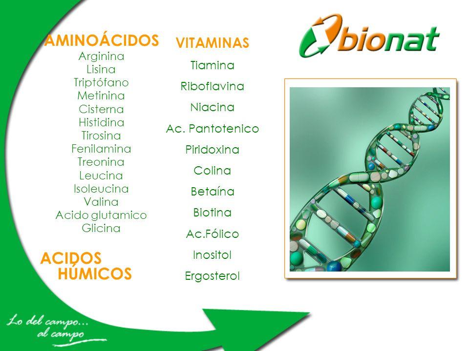 ACIDOS HÚMICOS AMINOÁCIDOS VITAMINAS Tiamina Riboflavina Niacina