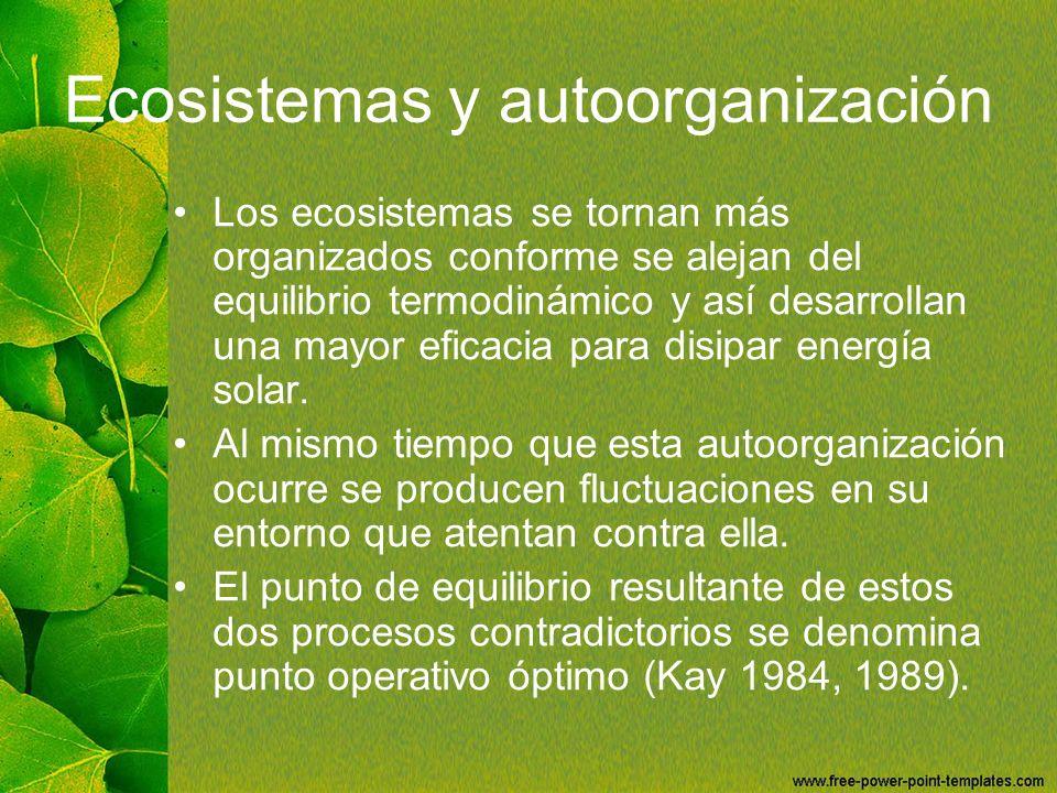 Ecosistemas y autoorganización