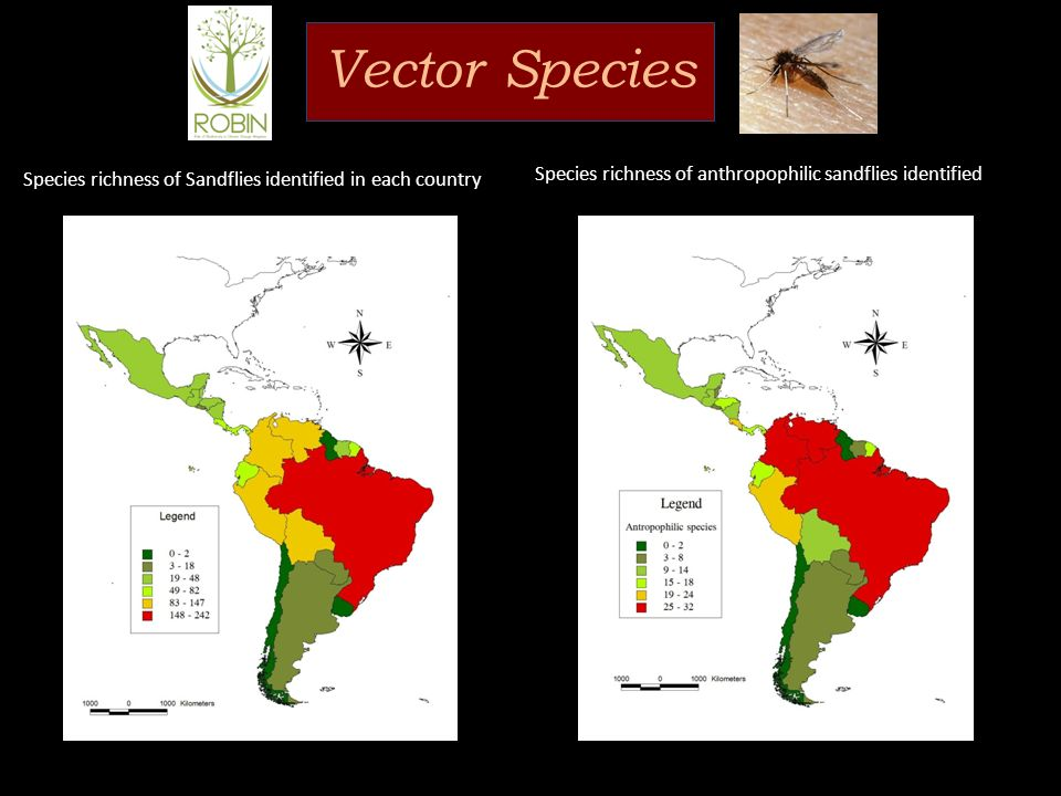 Vector Species Species richness of anthropophilic sandflies identified